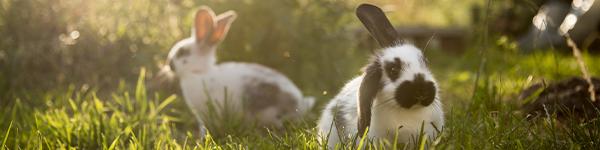 Versicherung_Kaninchen