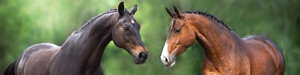 Versicherung_Pferd